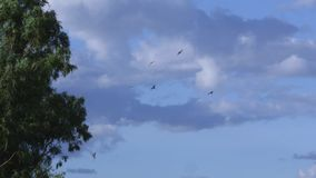 A shot of eagles on sky