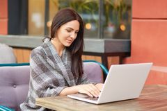 Shot of female freelancer creats publication for content blog, uses modern gadget, keyboards on laptop, poses on sofa in cafeteria. Graphic designer types royalty free stock images