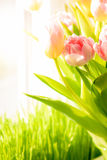 Shot of fresh pink tulips standing on windowsill Stock Photo