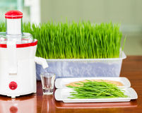 Shot glass of wheat grass with fresh cut wheat grass Stock Photos