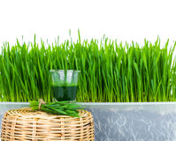 Shot glass of wheat grass with fresh cut wheat grass. And wheat grains Royalty Free Stock Photo