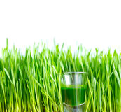 Shot glass of wheat grass with fresh cut wheat grass Stock Image