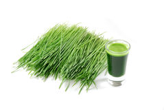 Shot glass of wheatgrass Royalty Free Stock Photography