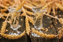 Shot glasses with grain Royalty Free Stock Photo
