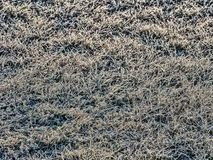 Frost-covered grass bakground royalty free stock image