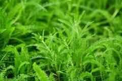 Fern. Shot of green fern leaves Stock Photos