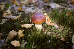 Shot of a Group of Mushrooms on the Forest Floor. Royalty Free Stock Photography