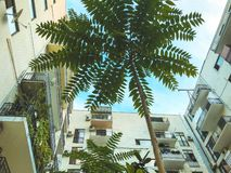 A shot of a high-rise building and beautiful green tree from the bottom up against the sky.  stock photography