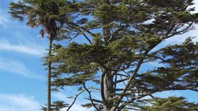Shot of a huge tree in a sunny day. Top to down shot of a huge tree in a sunny day stock video footage