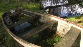 Shot of the inside of an old wooden boat. That has been beached and is full of swampy water and plants growing inside. The waters edge and grass surround it stock footage