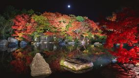 Autumn leaves and waterfall of Japanese garden at night. royalty free stock photography