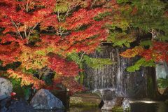 Autumn leaves and waterfall of Japanese garden at night. stock photos