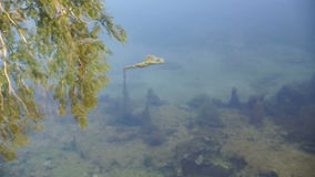 Shot of lake scenic in summer. Blurred nature unfocused background. stock video footage
