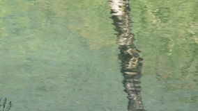 Shot of lake scenic in summer. Blurred nature unfocused background. stock footage