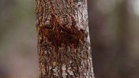 A broken part of a trunk. A shot of a latched trunk in focus. The trunk is old and patterned with texture stock video