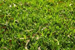 Shot leaf grass Stock Photography