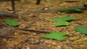 A shot of leaves on ground. A medium shot of leaves on the ground stock footage