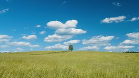 Lonely tree on green field against blue sky background. Shot of lonely tree on green field against blue sky background stock footage