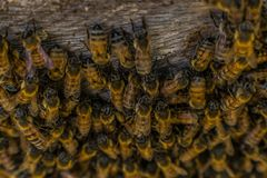 Bee farm. Shot made from one side of the bee farm in San Lucas Toliman, Solola, Guatemala Royalty Free Stock Images
