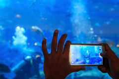 Shot of a man taking a snapshot of the fish in an aquarium Stock Photos