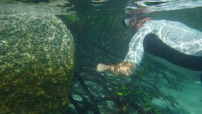 A diver swimming through the mangroves. A shot of a man underwater swimming near the mangroves. Small leaves are growing on mangroves stock video footage