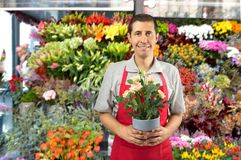 Florist salesman ready to attend. Shot of a man working in a garden shop with plants and flowers Stock Photos