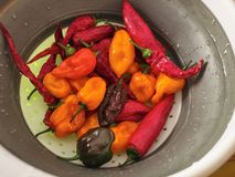 Shot of a mix of red, orange, yellow and black peppers royalty free stock image