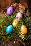 Shot of painted colorful easter eggs on fir tree Royalty Free Stock Image