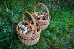 Pair wicker baskets with mushrooms Stock Images