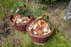 Shot of pair wicker baskets with mushrooms Royalty Free Stock Image