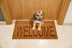 Dog welcome home Royalty Free Stock Images