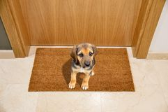 Dog welcome home Stock Photography