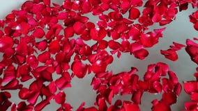 Shot of red rose petals in bathtub, Hotel Amar Villas, Agra, Uttar Pradesh, India stock video footage