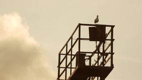 Shot of a seagull resting. Shot of a seagull resting stock footage