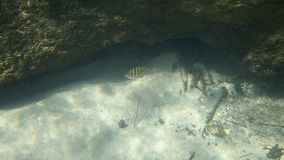 A fish coming out under a rock formation stock footage