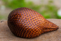 A shot of snake fruits taken at a local market, Malaysia. Royalty Free Stock Photo