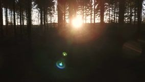 Shot of sunlight at sunset or sunrise flaring through the trees in a dark forest. Stabilized tracking shot of sunlight at sunset or sunrise flaring through the stock video