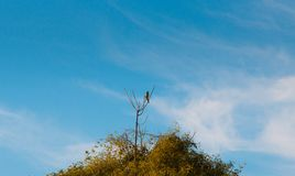 Bird standing atop of a tree in the forest in the countryside of São Paulo Brazil stock image