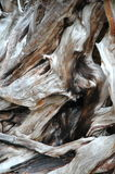 Shot of tree bark. Tree bark in the forest Royalty Free Stock Photos