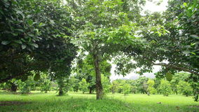 A shot of trees and leaves on a grass field. A wide shot of trees and leaves stock video