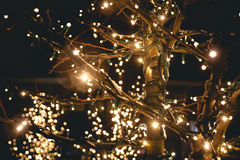Shot of trees on street decorated with lights Stock Photo
