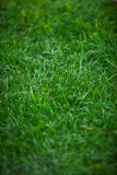 Shot of uncut fresh green grass Royalty Free Stock Photography