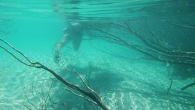 Tracking a snorkeler. A shot underwater behind mangroves tracking a snorkeler stock footage