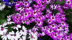 Shot of variety of flowers in bloom, Agra, Uttar Pradesh, India stock video footage