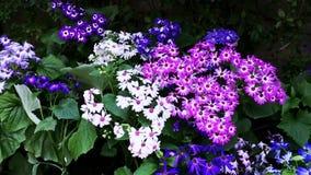 Shot of variety of flowers in bloom, Agra, Uttar Pradesh, India stock video