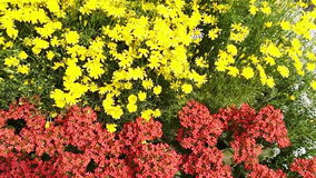 Shot of variety of flowers in plant nursery, Agra, Uttar Pradesh, India stock footage