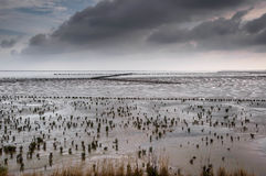 Shot of the wadden at Ameland. In Holland Royalty Free Stock Photo