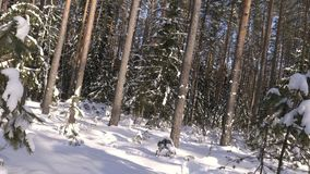 Shot of winter forest and snow-covered trees stock video footage