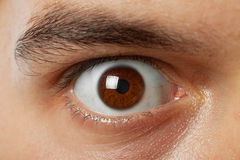 Shot of young man brown eye Royalty Free Stock Photo