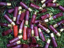 Shotgun cartridges on forest floor royalty free stock photos